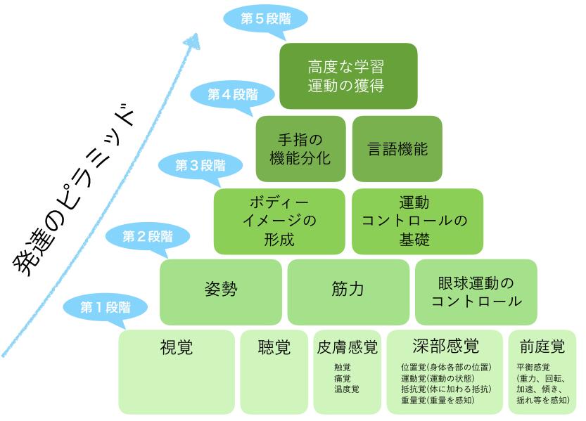 感覚・運動プログラム